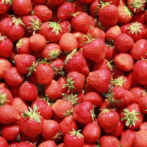 erdbeeren2_web