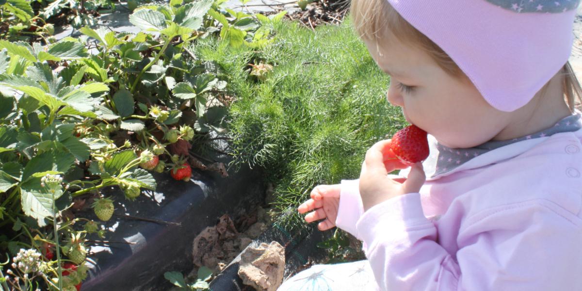 Erdbeere_1