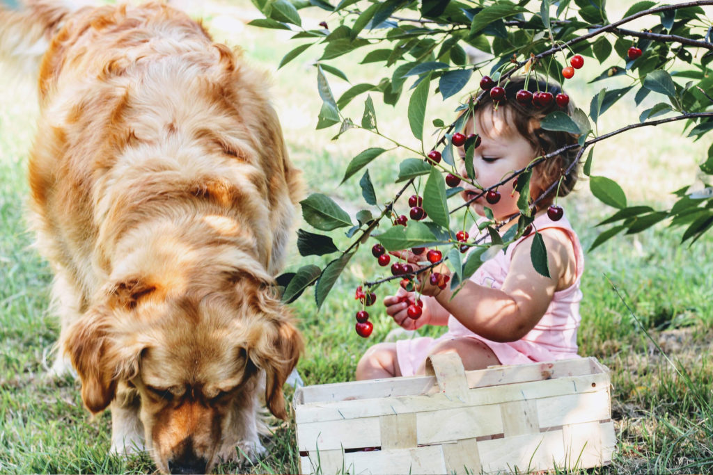 Kirsch-Kinderspiele